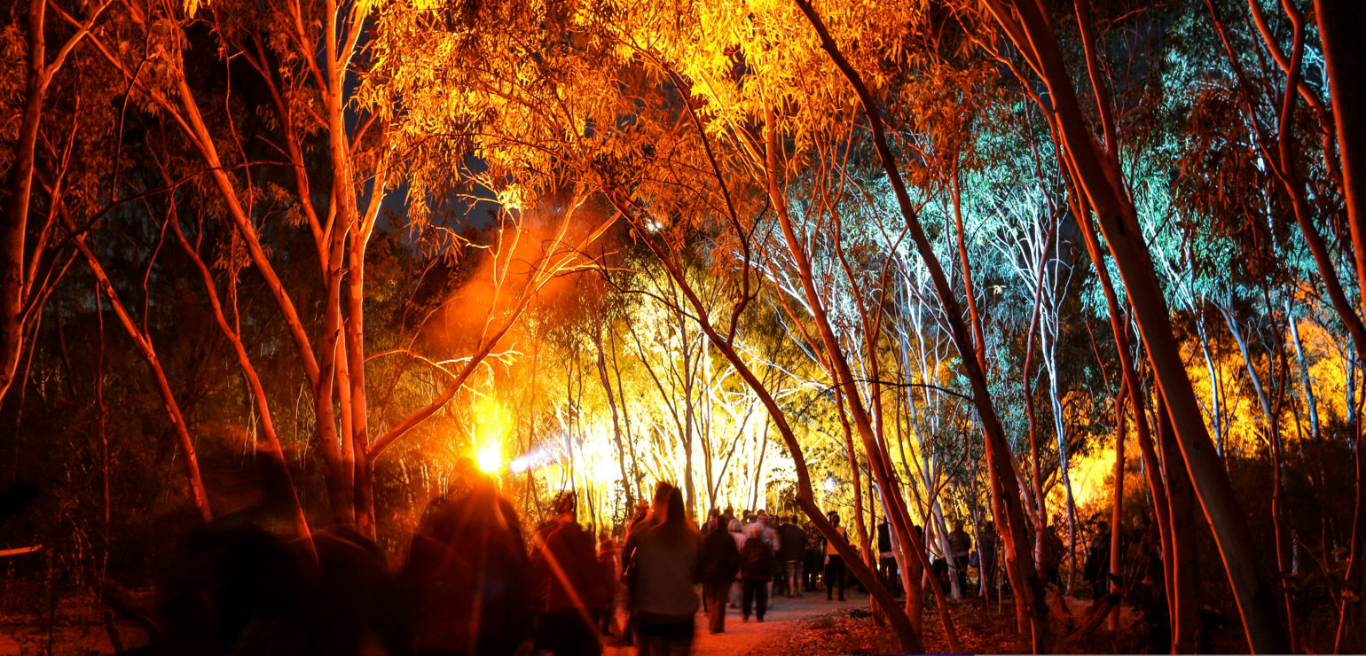 A crowd of people congregate underneath a canopy of eucalyptus trees at twilight. In the distance, a light shines through the trees.
